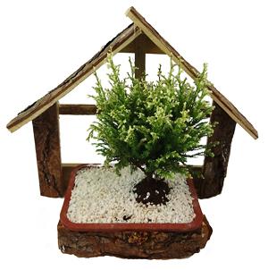 bonsai arvore na casinha 2